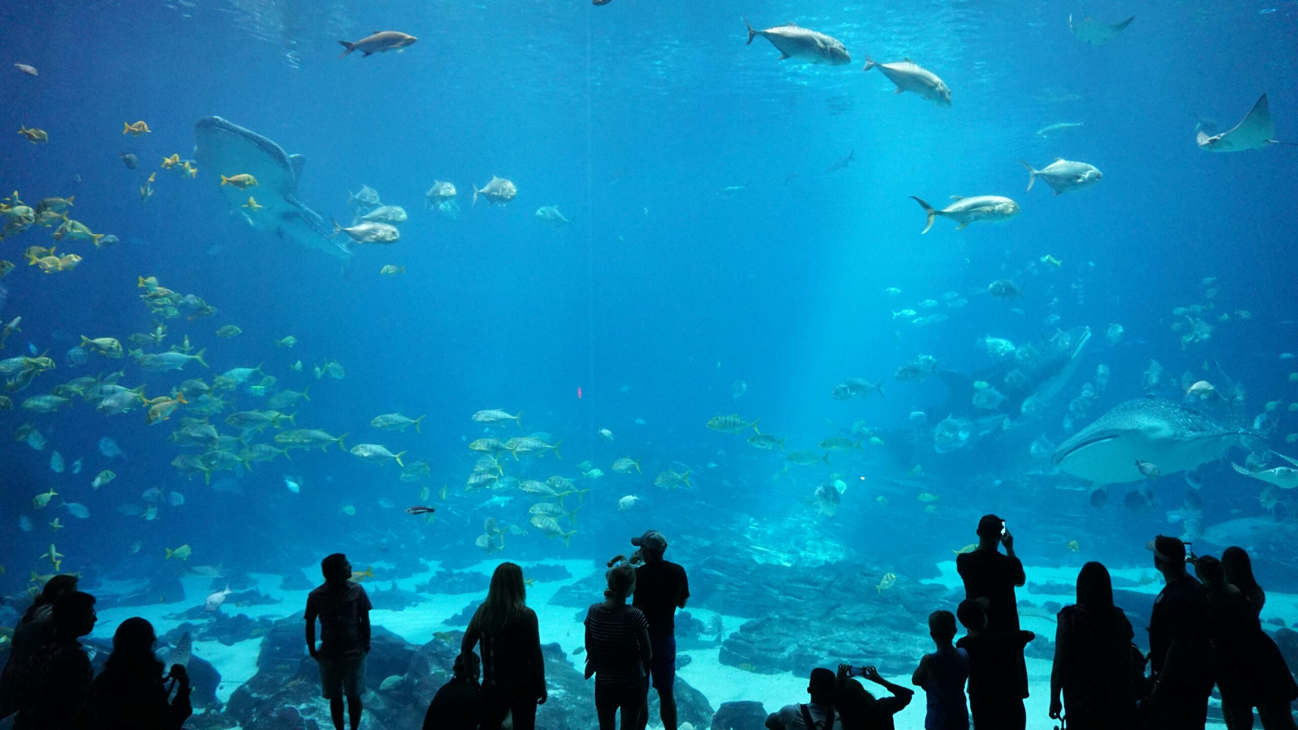 Aquarium with fish, people in foreground