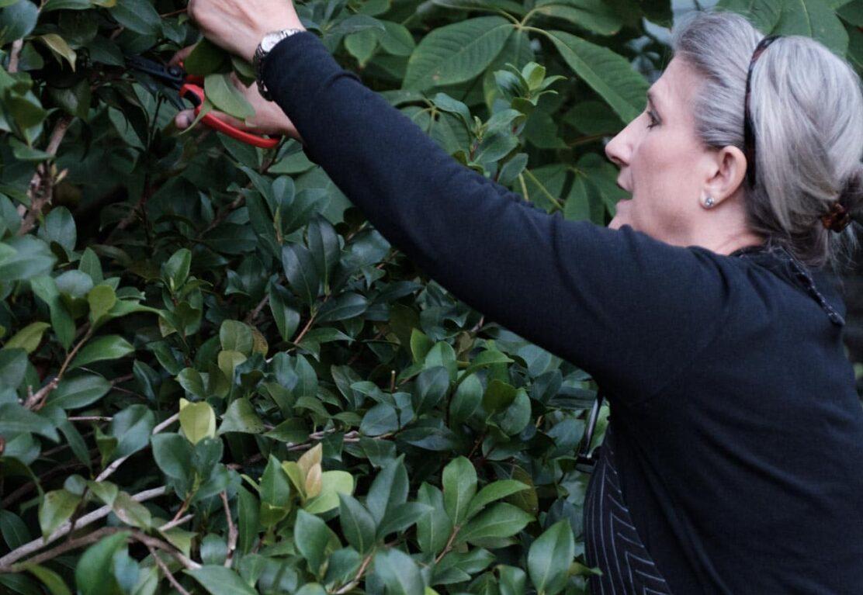 Grace Cardona caucasian woman clipping greenery from bushes