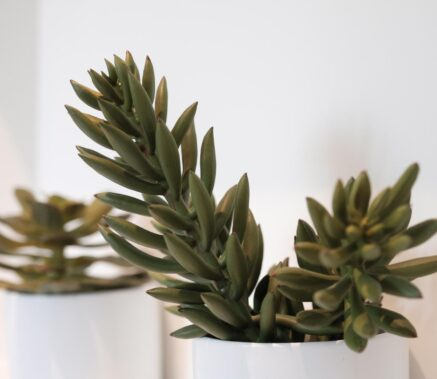 Master Suite potted succulents in Stonehurst Place