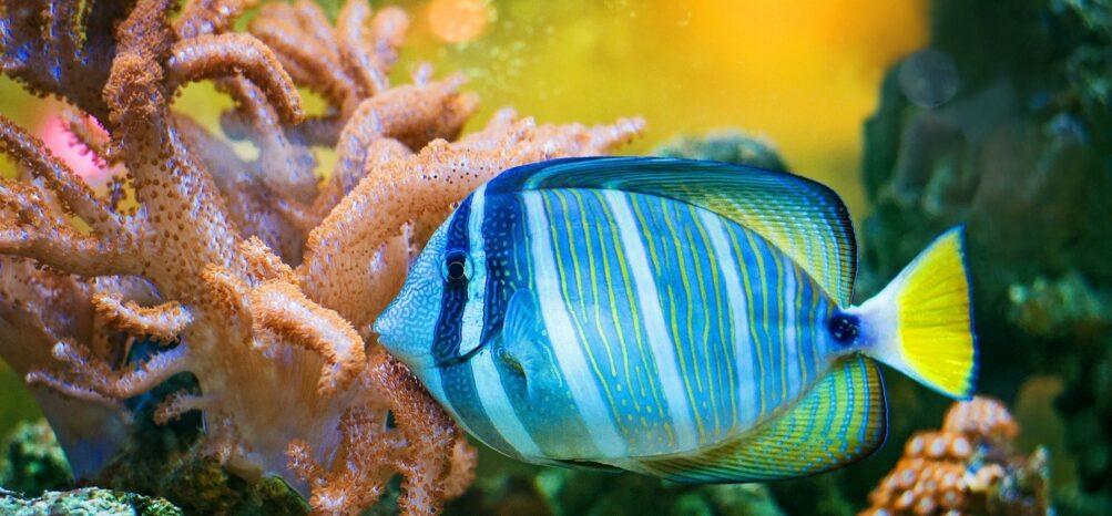 A fish at the Atlanta Aquarium